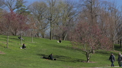 Prospect Park Brooklyn on a Spring Day Stock Footage