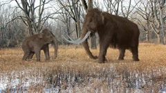 Woolly Mammoth And Baby In Ice Age Forest Animation Stock Footage
