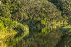 Hillside and trees reflecting in remote river Stock Photos
