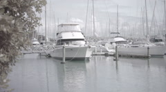 Auckland Westhaven marina Stock Footage
