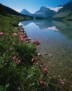 Bow lake at banff national park Stock Photos