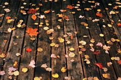 Fallen leaves on a deck Stock Photos