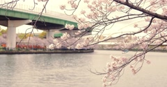 Beautiful Pink Sakura tree on the river in Japan Stock Footage