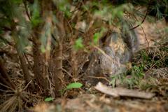 Rabbit is Beautiful Animal of Nature Stock Photos