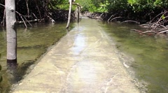 The path through the mangroves flooded water tide. Philippines. Stock Footage
