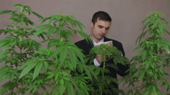 Happy businessman smelling Cannabis plants and money - stock footage
