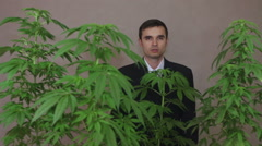 Dissatisfied businessman with Cannabis plants arguing - stock footage