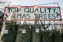Christmas trees for sale Stock Photos
