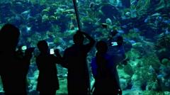 Large aquarium in Hong Kong. Panorama. Stock Footage