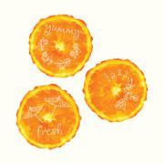 Vector watercolor orange slice circles, hand drawn doodle elements. Stock Illustration