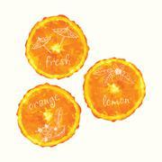 Vector watercolor orange slice circles, hand drawn doodle elements. - stock illustration