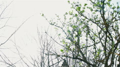 Tree After Lightning Strike - stock footage