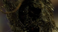 maggots inside body and a fly (BMCC 2.5K - 2400x1350) - stock footage