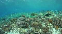 Coral Reef Diversity in Indonesia Stock Footage