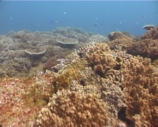 Ocean scenery on shallow coral reef, UP11646 Stock Footage