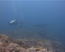 Expert diver with perfect buoyancy swimming on deep coral reef with Reef manta Stock Footage
