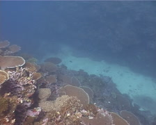Ocean scenery nice plate corals, on shallow coral reef, UP11697 Stock Footage