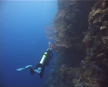 Red sea fan on wall, Melithaea sp. Video 11843. Stock Footage