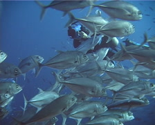 Expert diver with perfect buoyancy swimming with Bigeye trevally in Solomon Stock Footage
