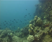 Ocean scenery fish among sunken pontoons used as WW2 World War II wharf, on Stock Footage