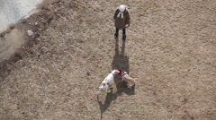 Top view of unrecognizable woman and two playing dogs - stock footage