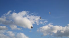 Group aerobatics of sports kites on wind in blue sky with clouds - stock footage