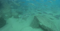 Clear water, moderate current near the top of the incoming tide, underwater, Stock Footage