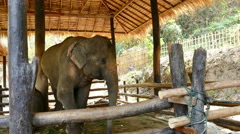 Mother and baby elephant in stable Stock Footage