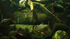 Fishes in an aquarium - stock footage