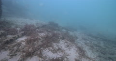 Huge mess of algae-encrusted line, underwater, discarded fishing tackle, 4K Stock Footage