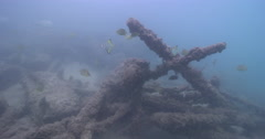 Lots of fish forming a cleaning station waiting for dirty fish, underwater, Stock Footage