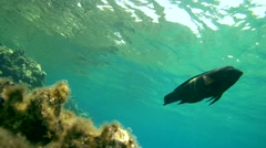 Underwater, The surface of the water and the glare of the sun - stock footage