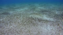 The sandy bottom covered with sea grass, Red sea, Marsa Alam, Abu Dabab, Egypt Stock Footage
