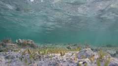 surface of the water and the glare of the sun on the sandy bottom - stock footage