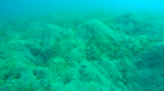 Sand hills covered with sea grass at the bottom of the sea, Red sea, Marsa Alam, Stock Footage