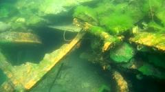 Demosponge (Lubomirskia baicalensis) Stock Footage