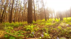 Squirrels frolic in the spring forest, sequence - stock footage