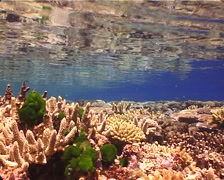 Ocean scenery beautiful, colourful reef, hard coral garden, on shallow coral Stock Footage