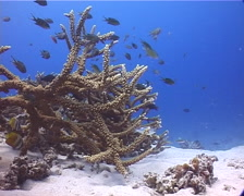 Ocean scenery on shallow coral reef, UP13993 Stock Footage