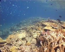 Ocean scenery hard coral garden, on shallow coral reef, UP14043 Stock Footage
