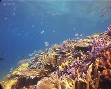 Ocean scenery on shallow coral reef, UP14059 Stock Footage