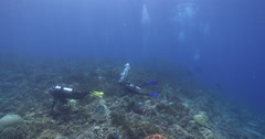 Group of scuba divers taking images on coral reef with Bigeye trevally Bignose Stock Footage