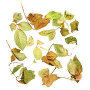 White surface covered with dried rose leaves as an abstract composition - stock photo