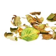 White surface covered with dried rose leaves as an abstract composition Stock Photos