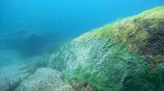 Underwater rocks overgrown Baikal sponges, Demosponge (Lubomirskia baicalensis) Stock Footage