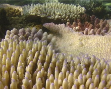Ocean scenery mixed species at various stages of bleaching, coral disease, - stock footage