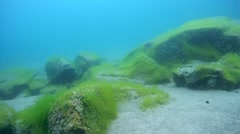 Sandy-rocky bottom overgrown with algae, Siberia, the Russian Federation, - stock footage