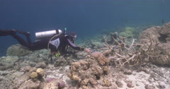 Point and shoot photographer taking images on stressed coral reef in Solomon - stock footage