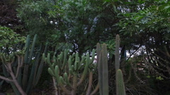 Cacti Growing in a Park in Cuenca - stock footage