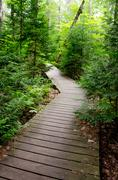 Wood Trail through a thick forest - stock photo